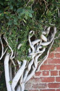 tree with twisted branches