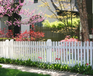 white picket fence and blossoming trees