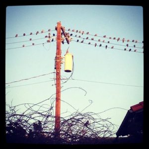 photo of birds on a telephone pole